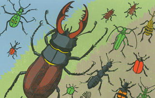 Exclusive Feature: Beetles by Richard Jones